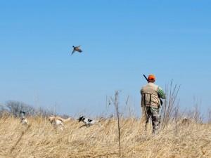 dogsbirdsclientinfield