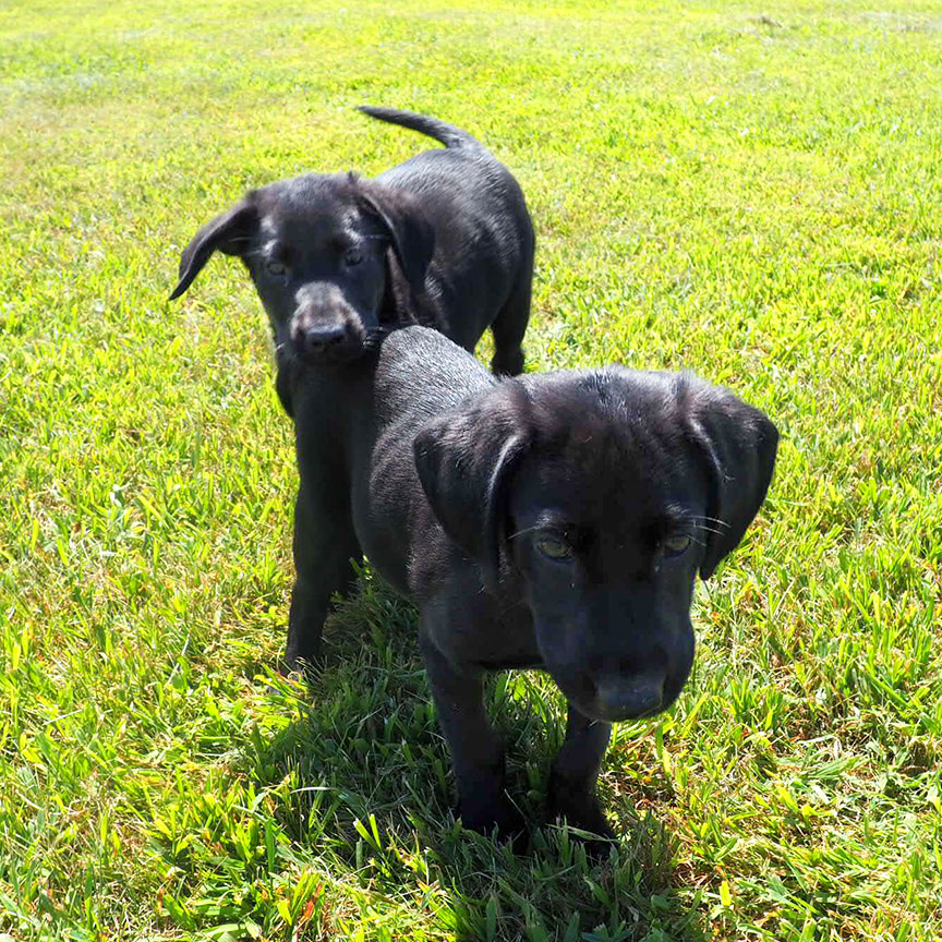 Stryder/Stokes SH Females