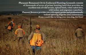 Nebraska Pheasant Hunting Premier Destination