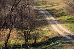 Nebraska Pheasant Hunting