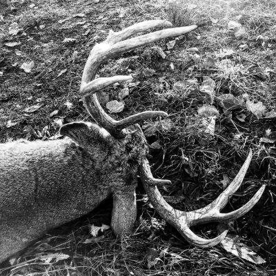 nebraska-deer-hunting4